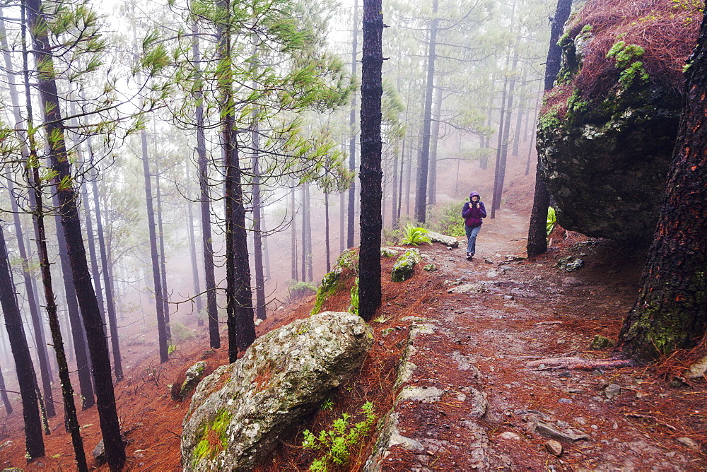 Spain, Canary Islands, Gran Canaria, Trail to Roque Nublo, Mid adult woman hiking in misty forest