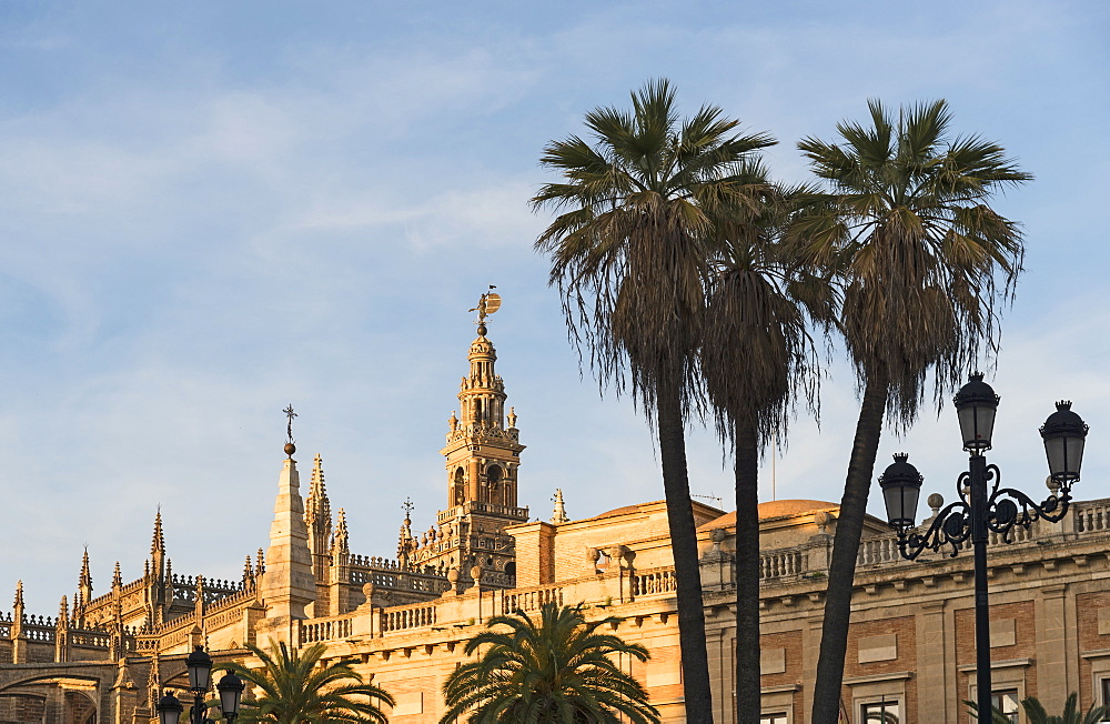 Spain, Andalusia, Seville, Giralda Tower and cathedral with palm trees in foreground - 1178-26278