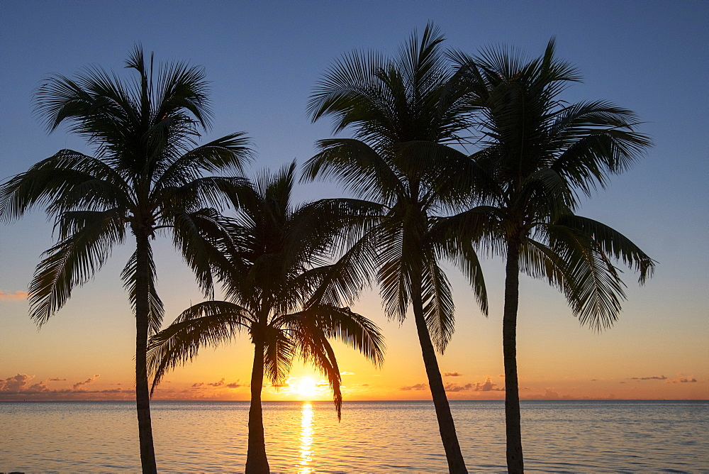 Silhouette of palm trees at sunset, Islamarada, Florida, Keys