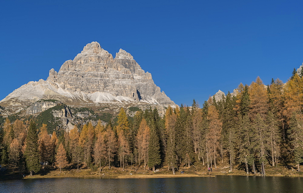 Pine forest and mountain in the Dolomites, South Tyrol, Italy