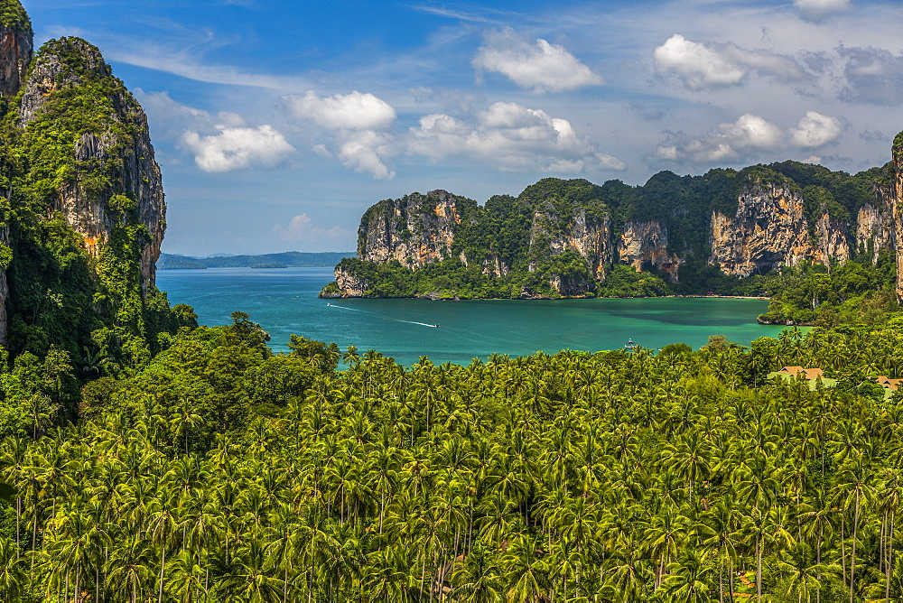 Forest by sea in West Railay, Thailand