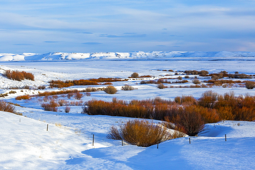 Bushes in snow field during winter in Fairfield, Idaho