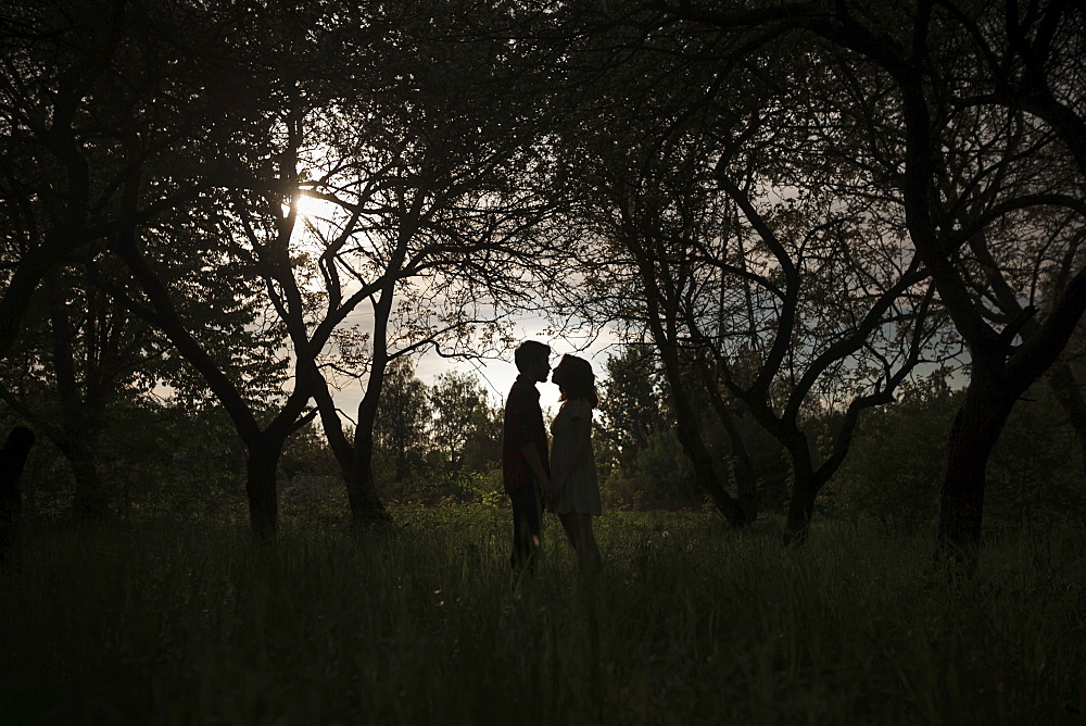 Silhouettes of young couple under trees
