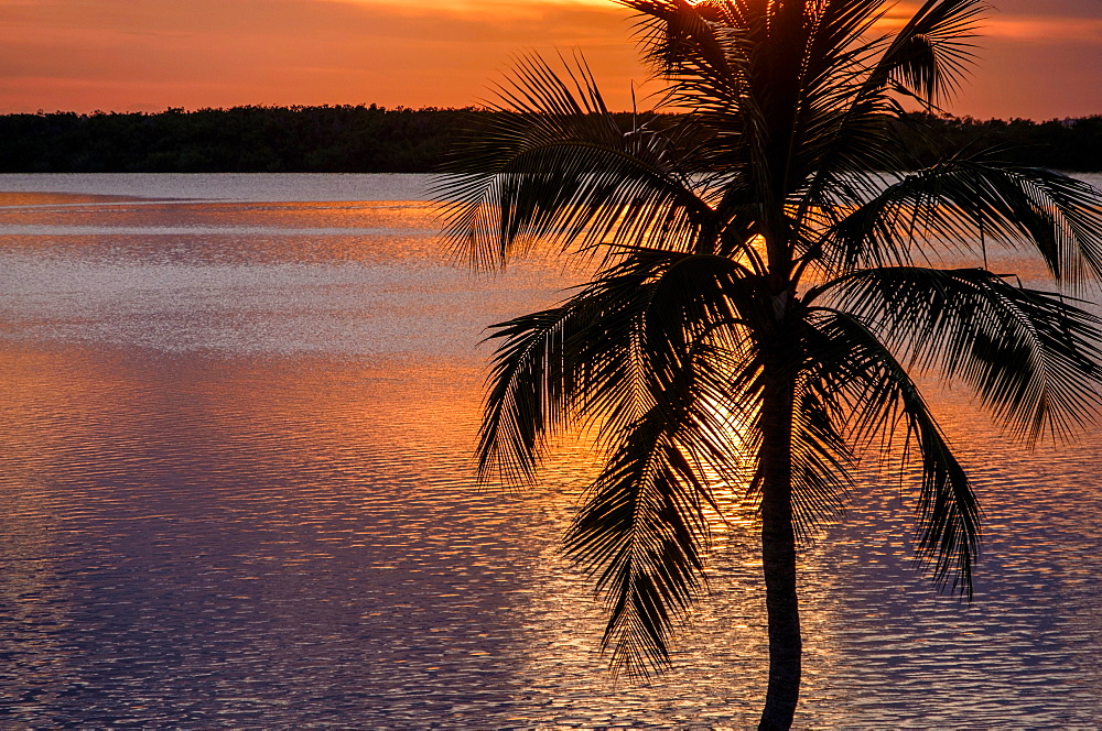 Silhouette of palm tree by sea at sunset