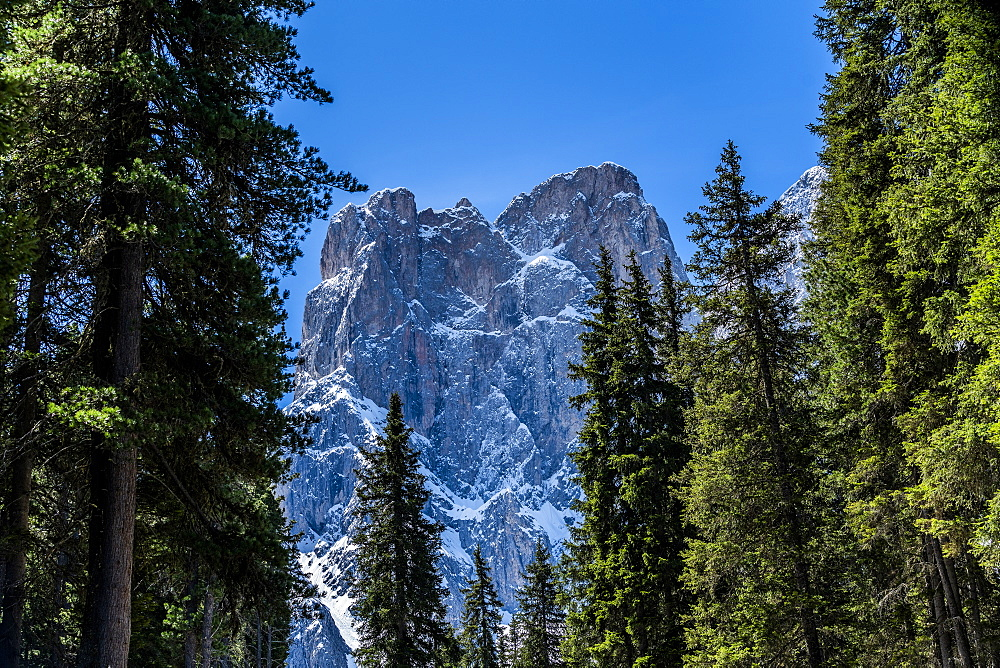 Trees in front of mountain peak in Dolomites, St. Peter, South Tyrol, Italy