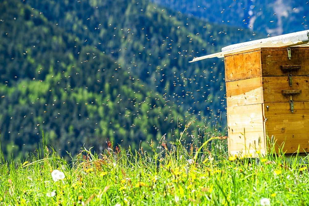 Bees by beehive in Dolomites, St. Peter, South Tyrol, Italy