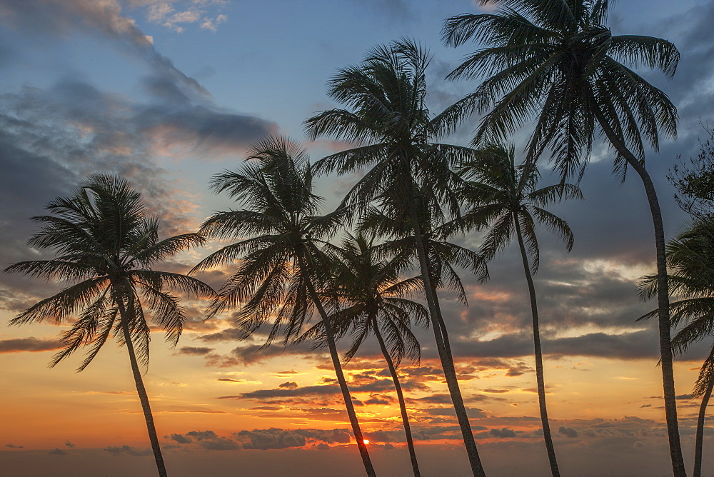 Silhouettes of palm trees against sunset cloudscape