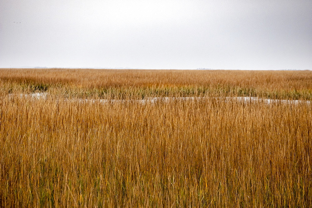 Brown crop field