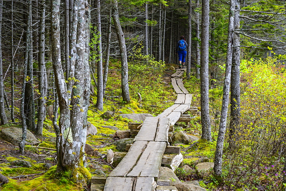 Woman hiking on boardwalk through forest