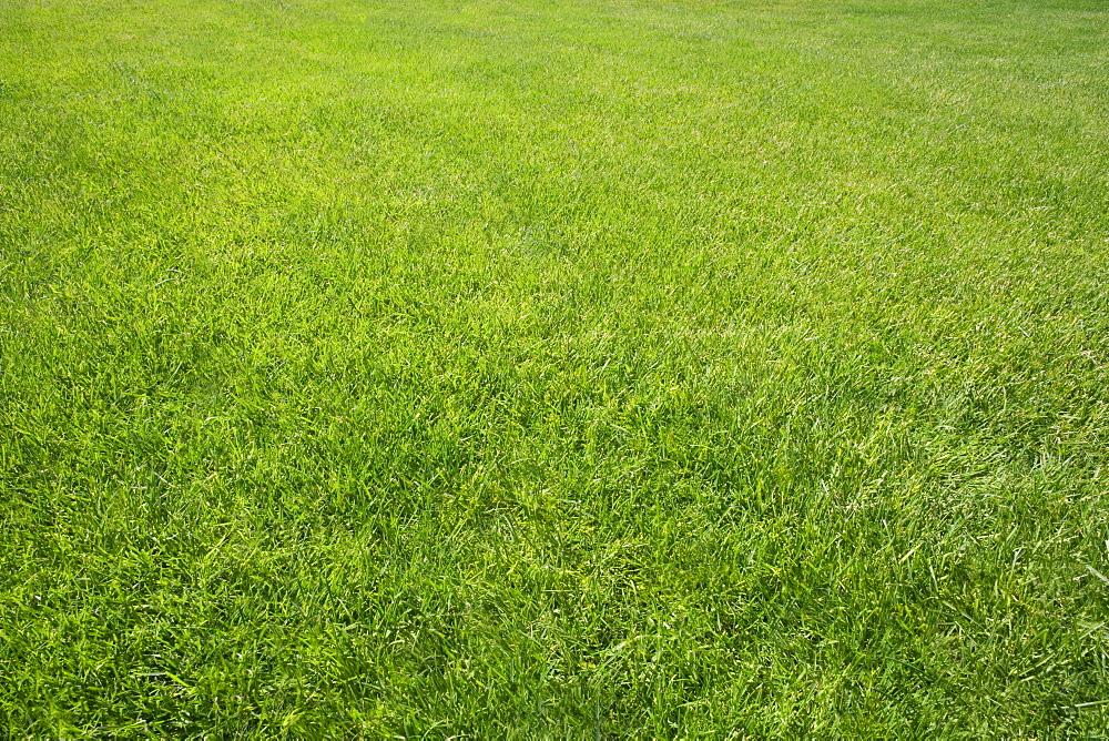 Field of green grass outdoors