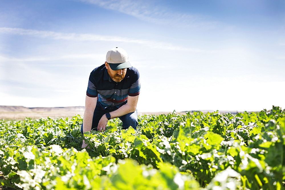 Man crouching in crop field