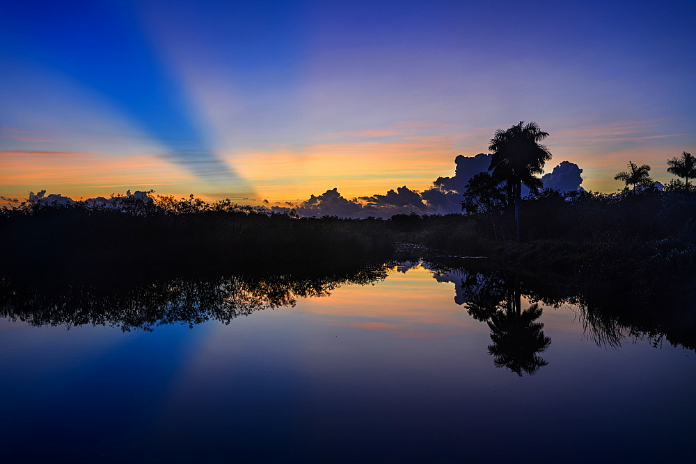 Trees by river at sunset in Everglades National Park, Florida, USA