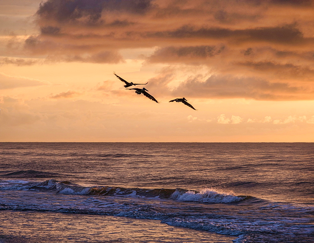 Silhouettes of birds flying over sea at sunset