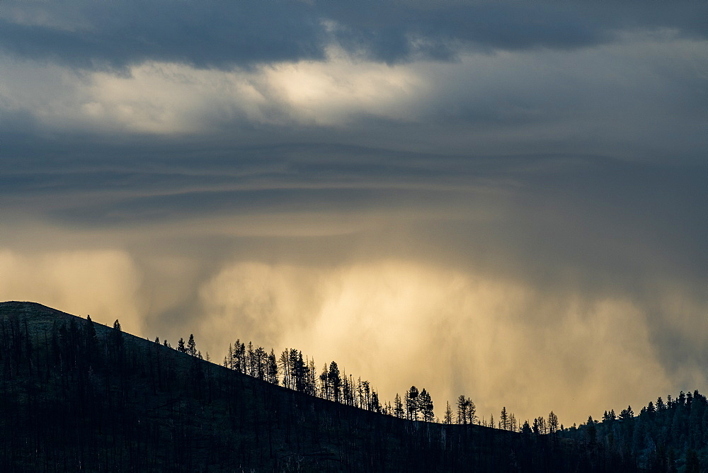 Silhouettes of trees under overcast sky in Bellevue, Idaho, USA