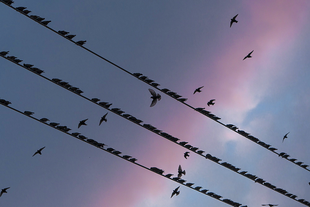 Silhouette of birds on power lines
