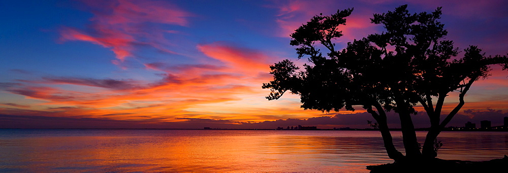 Silhouette of tree against cloud at sunset at Hobie Beach in Miami, Florida, United States of America