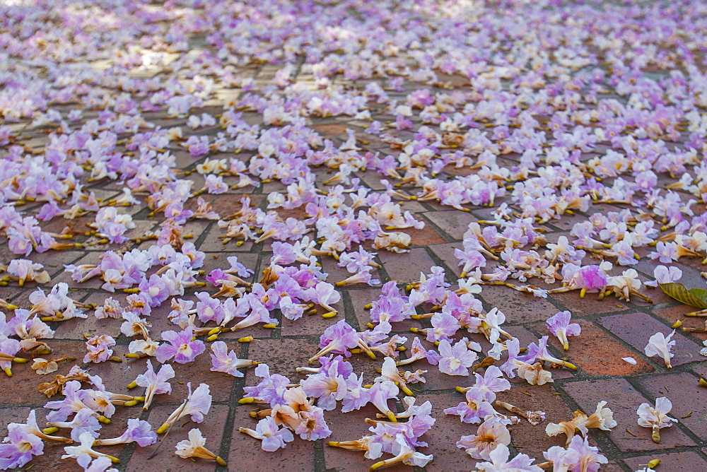 Purple flowers on pavement