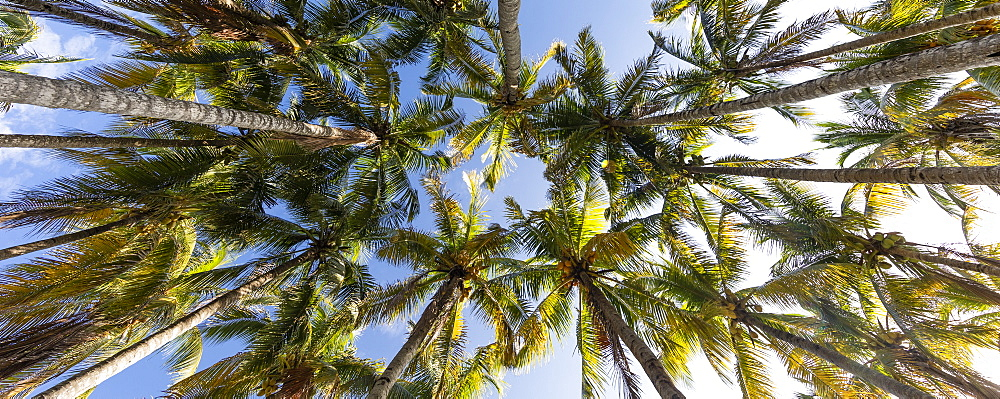 Palm trees against clear sky in Key Biscayne, Florida, United States of America