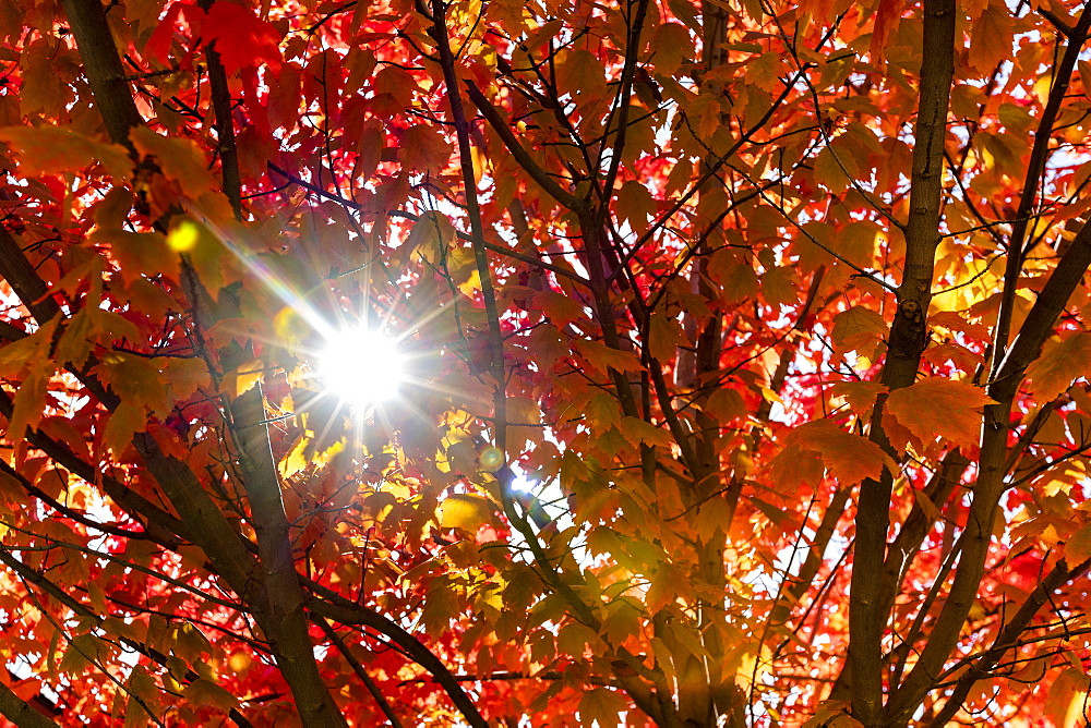 Sunbeam through autumn branches