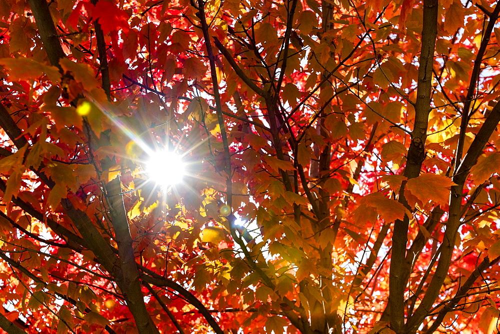 Sunbeam through autumn branches