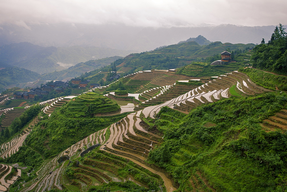 Longsheng Rice Terrace in Longsheng, Guangxi Province, China