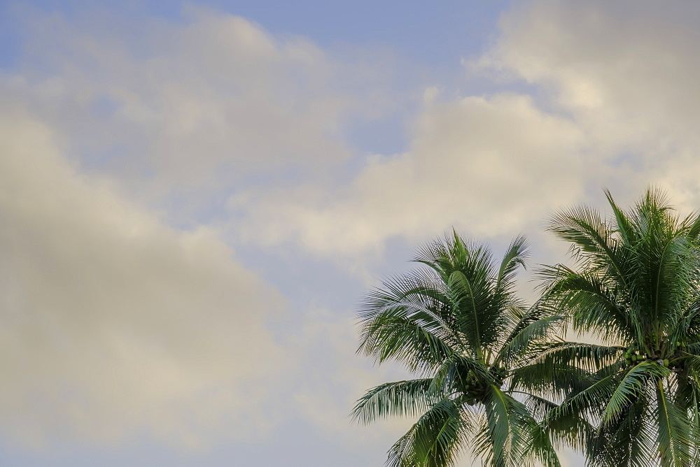 Palm tree against cloud