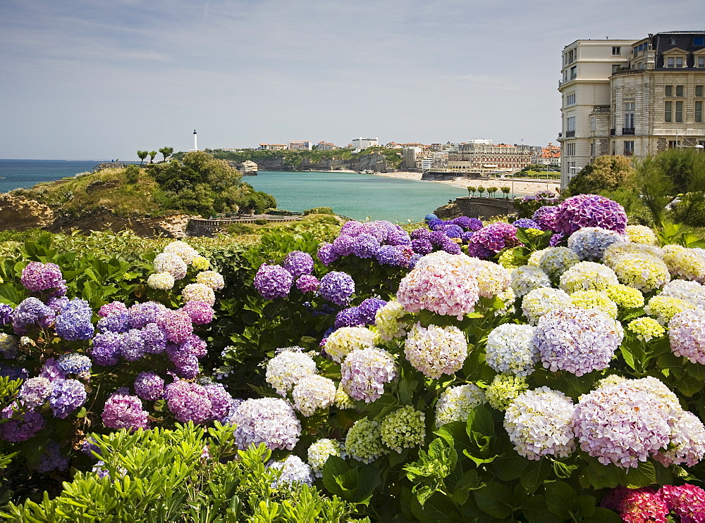 Scenic view of coastline with flowers in foreground