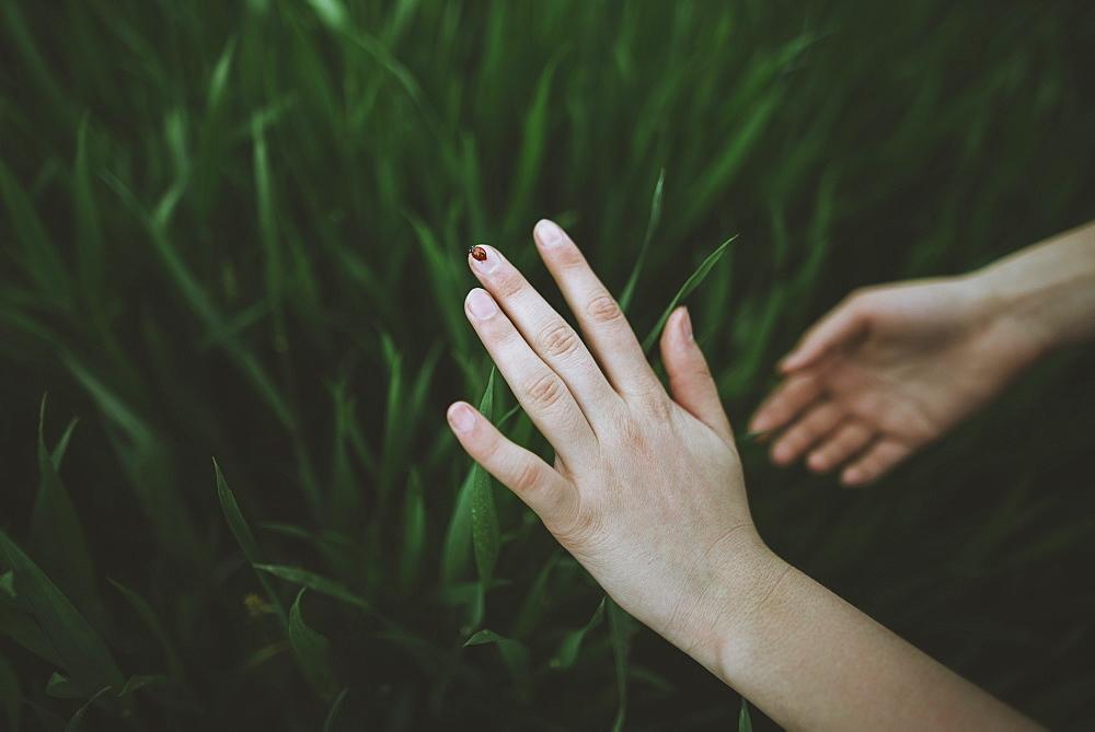 Woman's hands touching grass