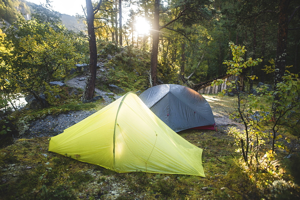 Tents in forest - 1178-28483