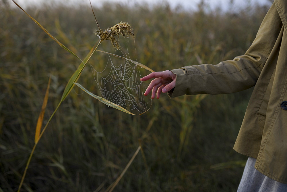 Hand of woman touching spiderweb on long grass