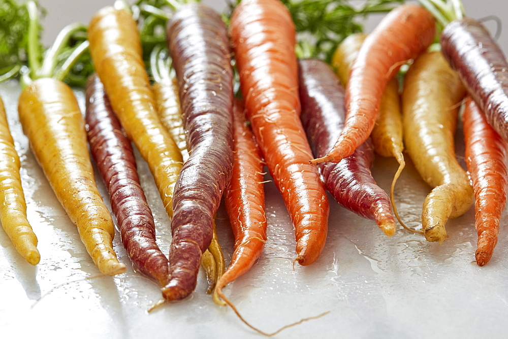 Variety of carrots - 1178-28627