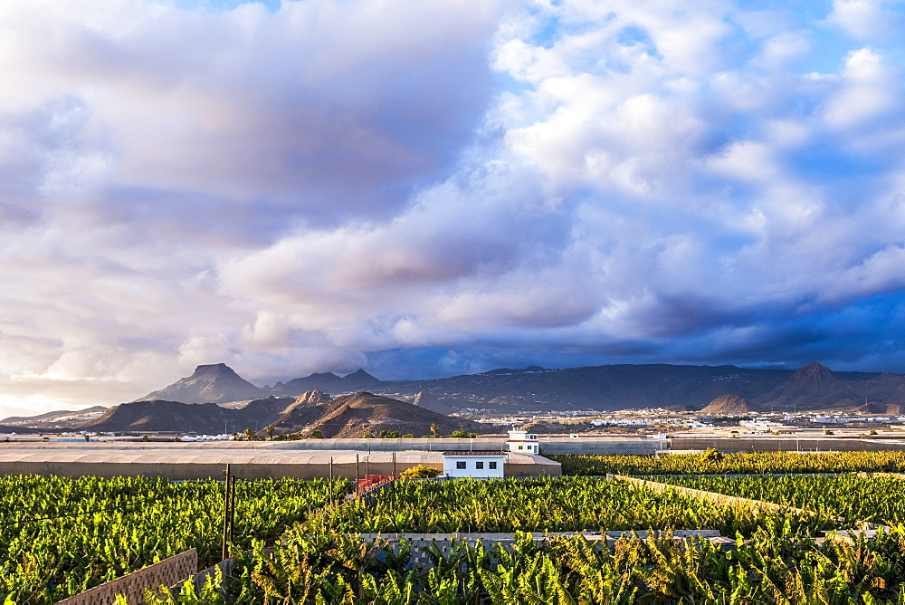Spain, Canary Islands, Banana plantation with mountains in background