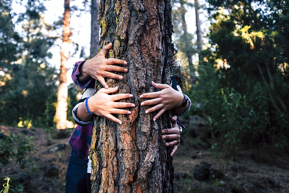 Couple embracing tree in forest