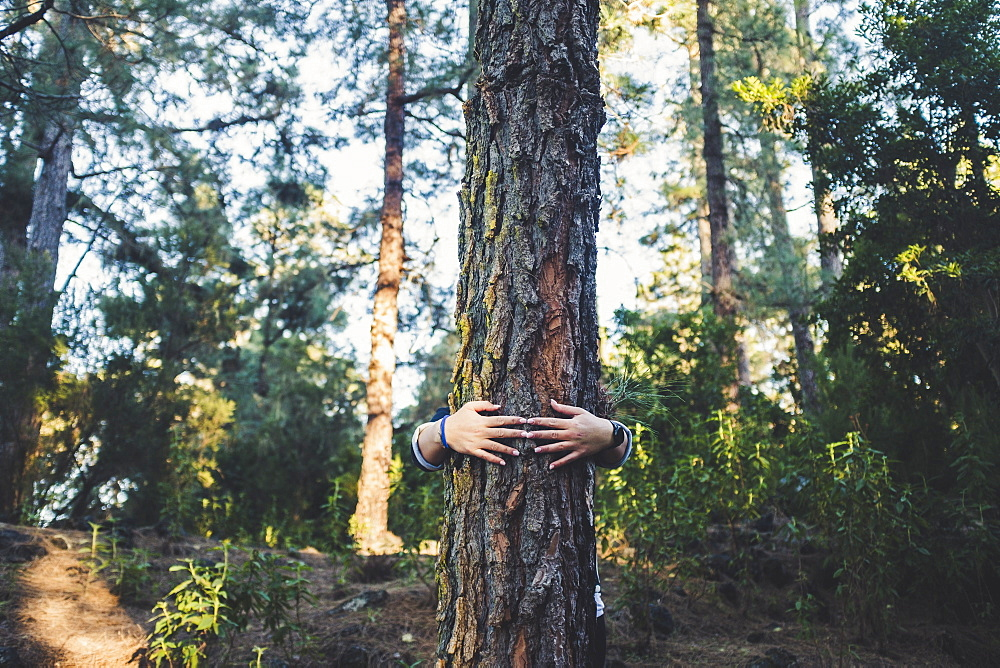Man embracing tree in forest
