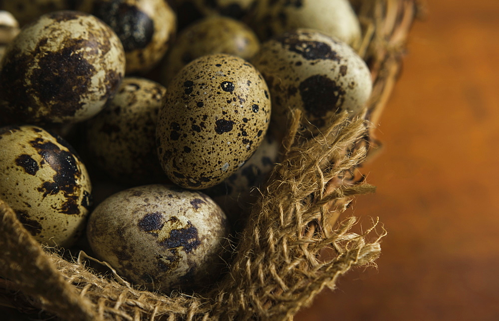 Bird eggs in basket