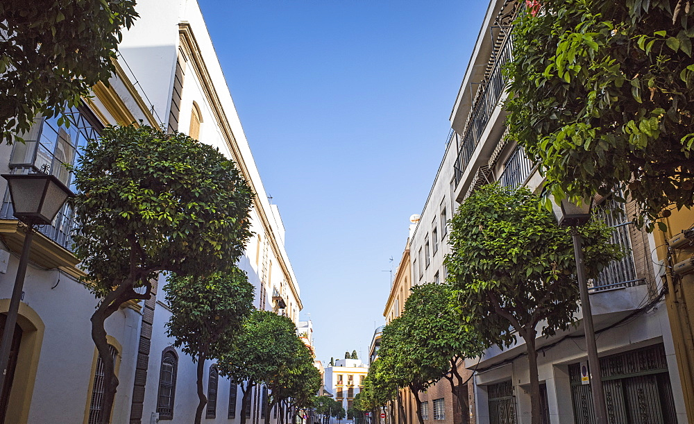 Spain, Andalusia, Saville, Tree lined street