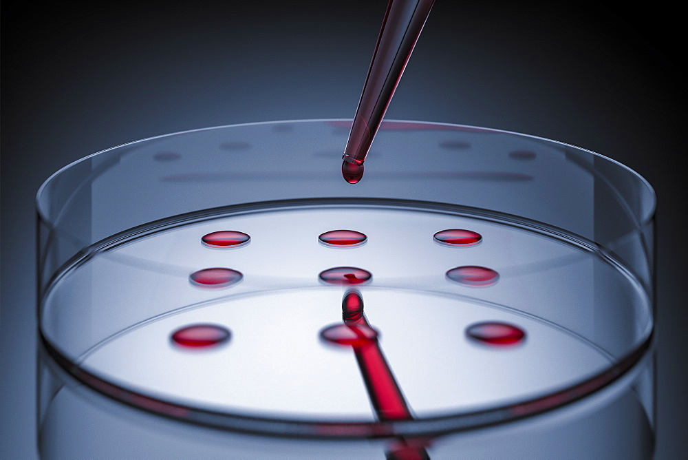 Blood sample tested on petri dish in laboratory