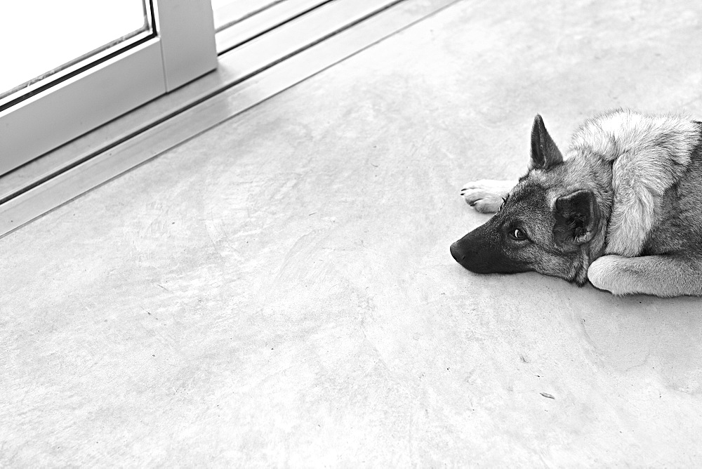 Dog lying down near entrance door