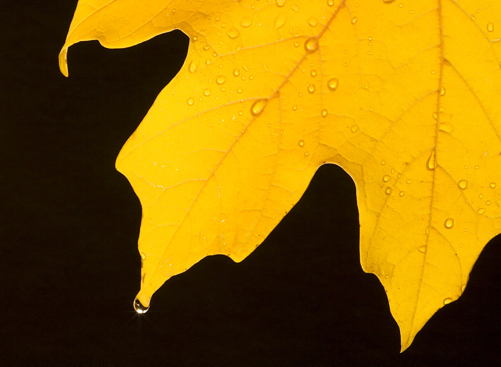 Closeup of fall leaf - 1178-2998