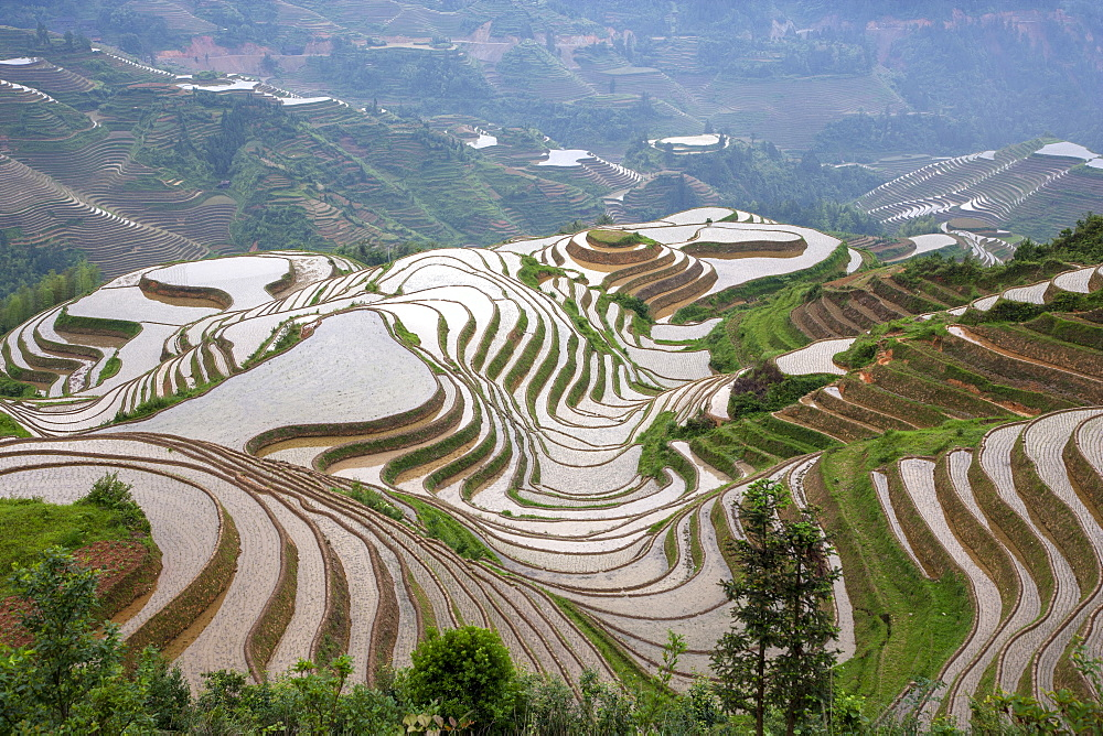 China, Guangxi, Guilin, Longsheng, Terraced rice fields