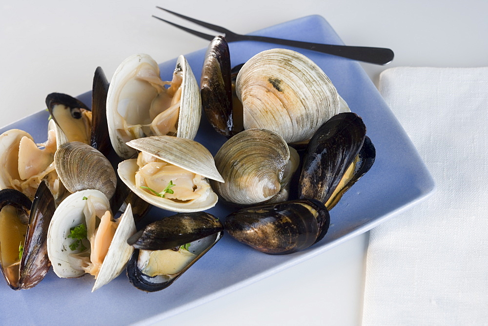 Still life of clams