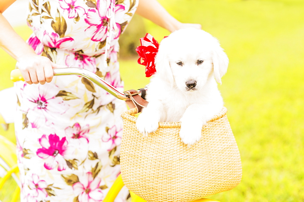 Mid-section shot of woman wearing dress driving bicycle with white puppy sitting in basket