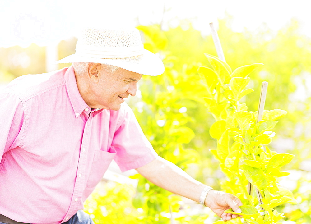 Portrait of senior man touching plant leaf in garden