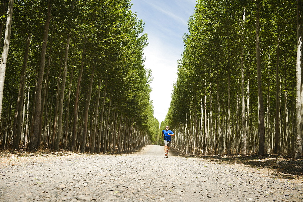 USA, Oregon, Boardman, Man running between rows of poplar trees in tree farm