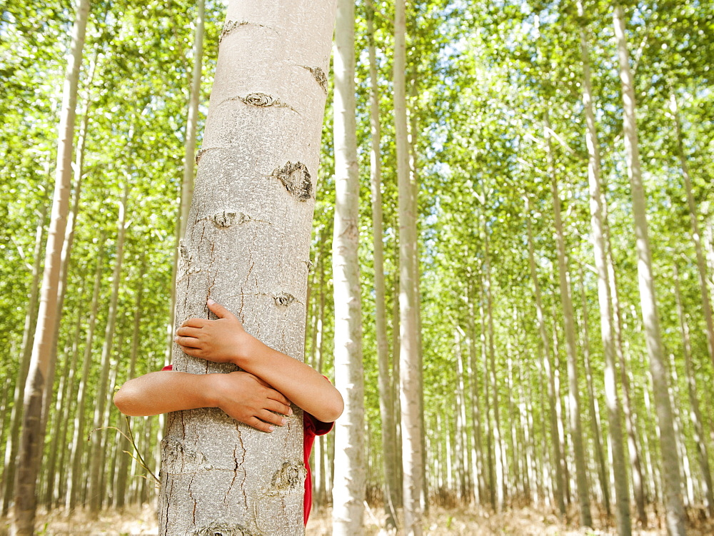 USA, Oregon, Boardman, Boy (8-9) hugging poplar tree in tree farm