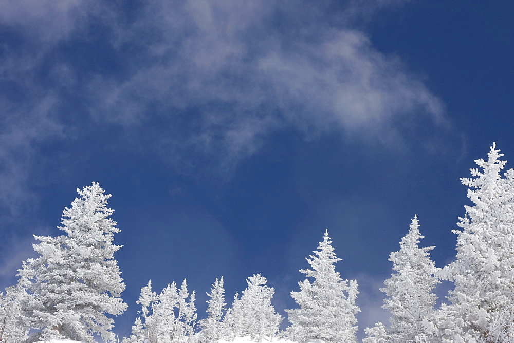 Low angle view of snow covered trees