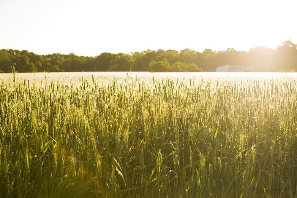 Sunny rural field