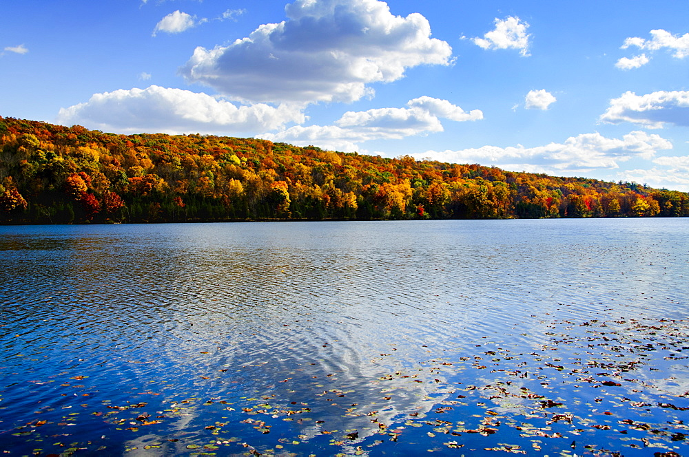 Fallen leaves floating on water, Kittatinny State Park, Sparta, New Jersey