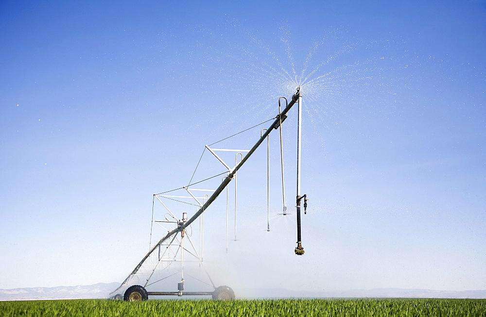 Sprinkler watering barley field, Colorado, USA