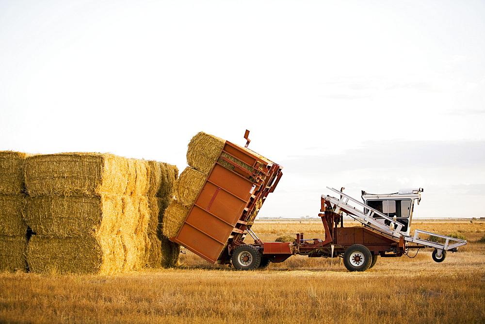 Tractor piling hay bales, Colorado, USA